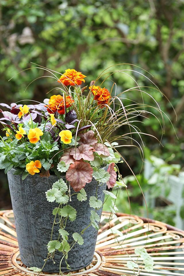 ガーデニング 寄せ植え アレンジメント 花 フラワー