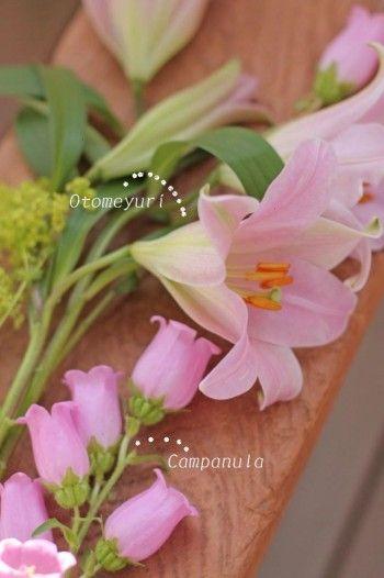合わせた花は、同じ薄いピンクのカンパニュラ。 和名を「釣鐘草(ツリガネソウ)、風鈴草」と言います。 カンパニュラも初夏のお花です。 和、洋、どちらにも似合いますので、オトメユリと相性はばっちりです。
