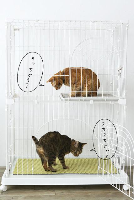 misaeyano_20160516_008