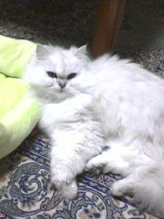101228_1916_0001ゴロン猫