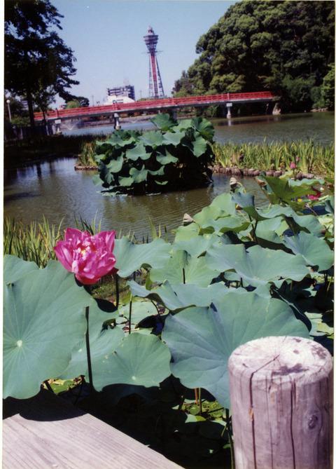 ちゃぶ池と橋と通天閣1990前半