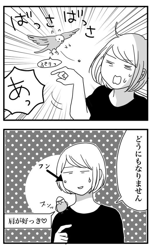 いんこ7のコピー 20.15.47