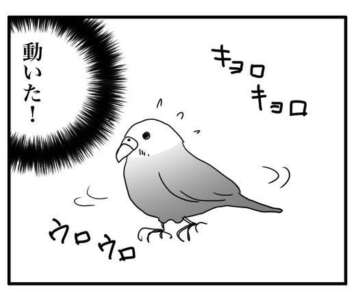 いんこ4のコピー3