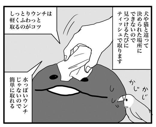 いんこ7のコピー2