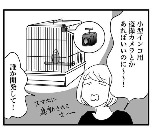 いんこのコピー4