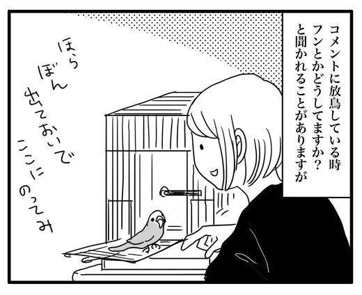 いんこ7のコピー