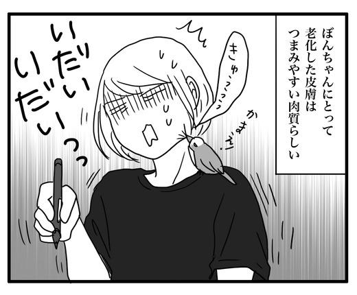 にわとりのコピー4