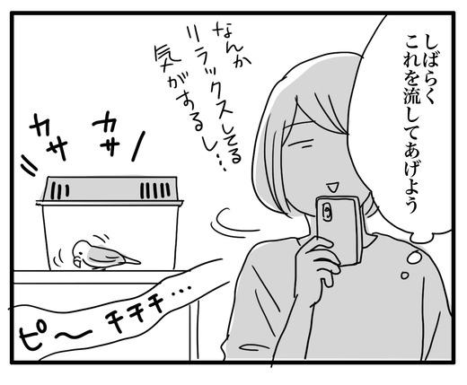 いんこ4のコピー2
