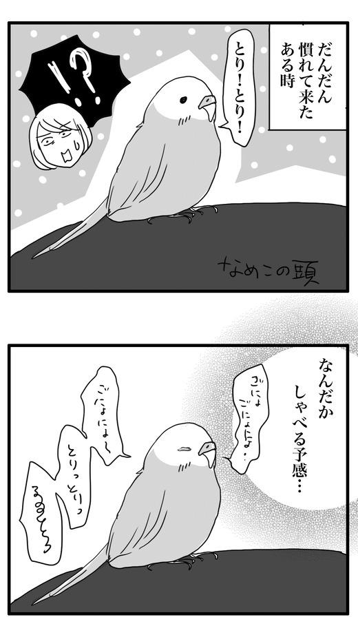 ぼんこのコピー4