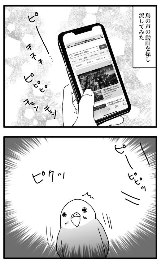いんこ4のコピー4