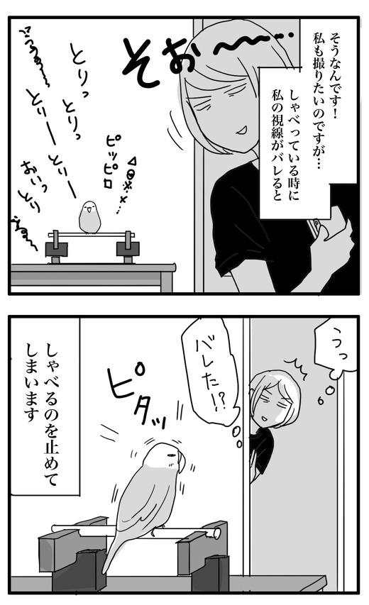 いんこのコピー2