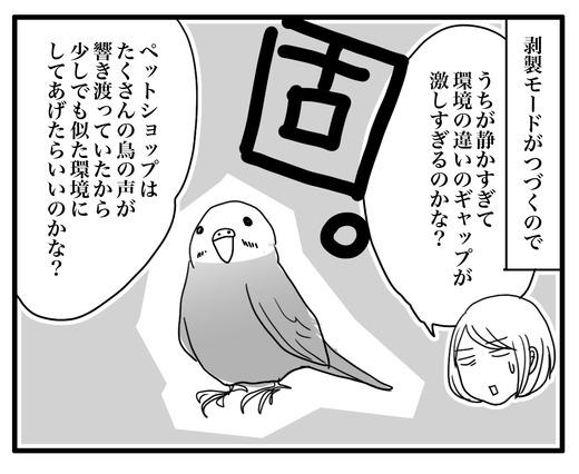 いんこ4のコピー