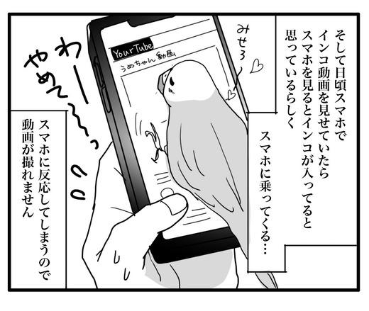 いんこのコピー3