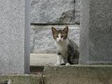 鬼が島の猫