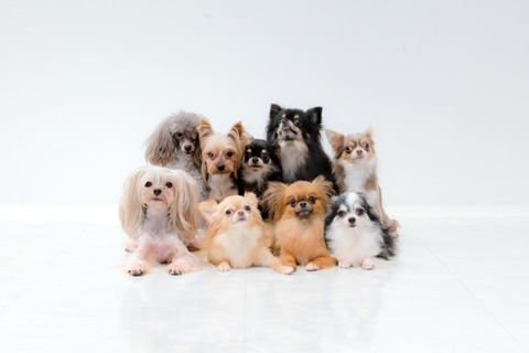 AC写真 いろいろな犬