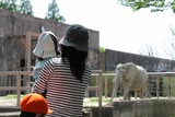 象を見るゆいか