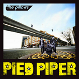 PIED PPIPER