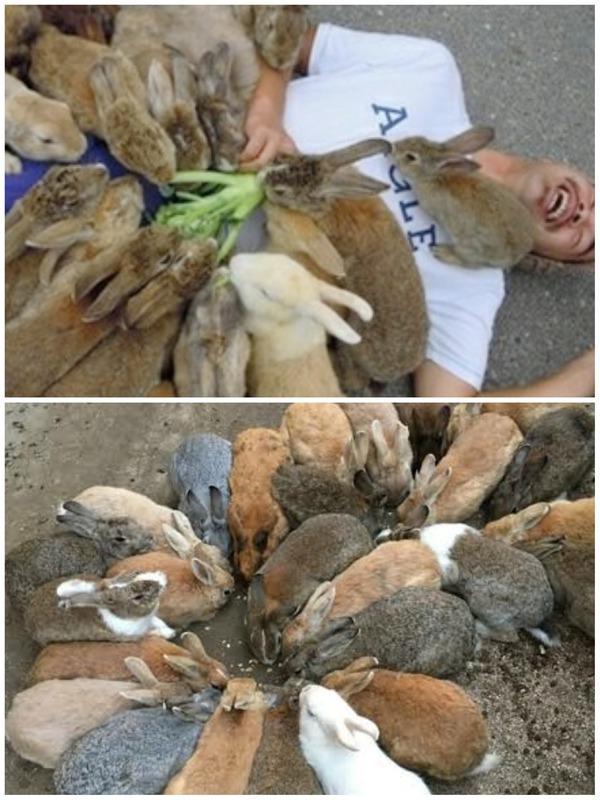 ウサギたち、大寒波の食糧難で肉食系に、共食いやオオヤマネコまで捕食