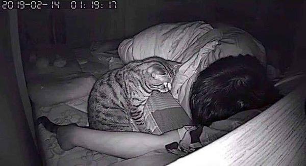 ネッコ「ご主人寝とるな…」ネッコ「ギュッ❤」