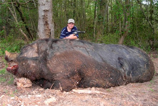 monster-pig