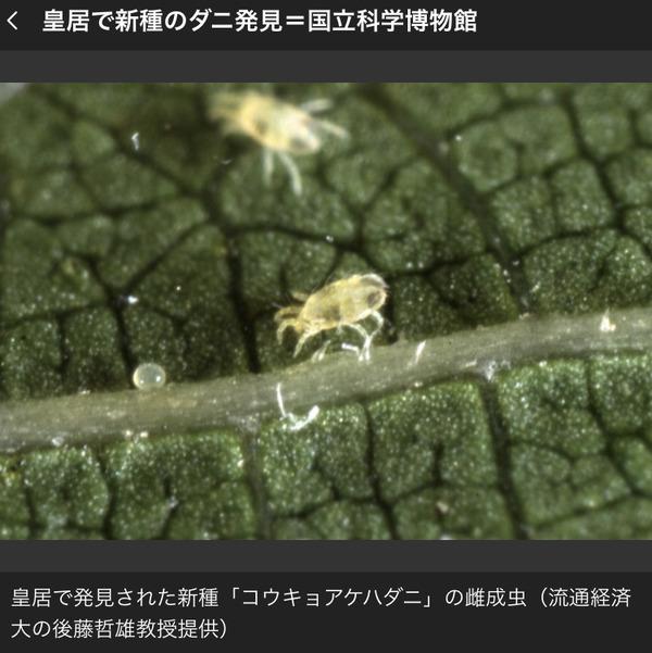 皇居で新種のダニ発見