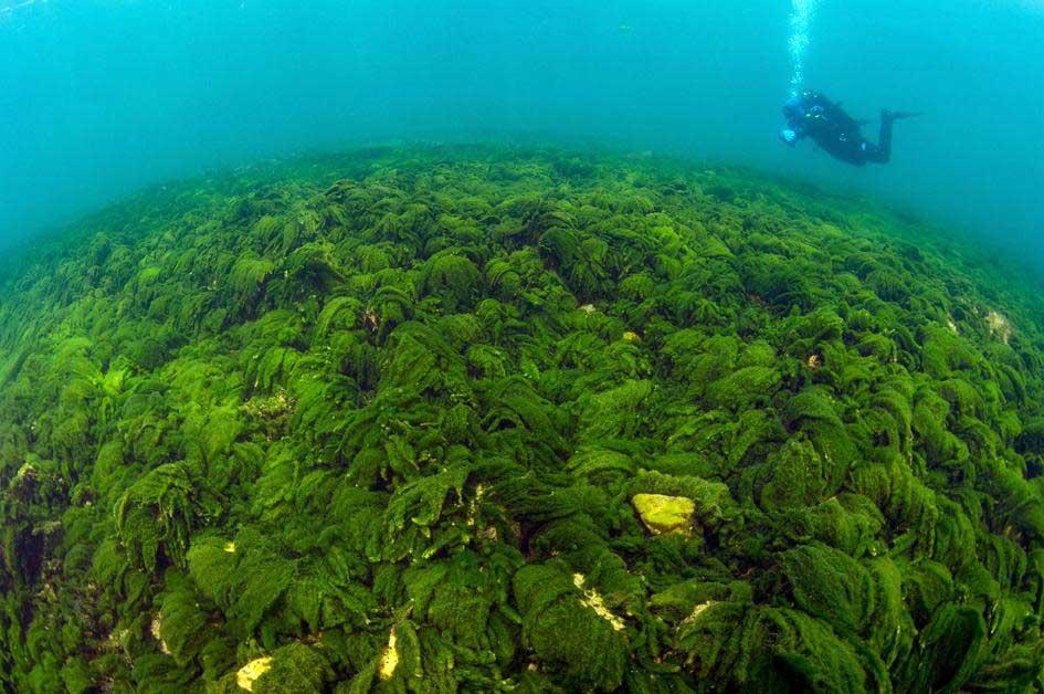 バイカル湖の画像 p1_14