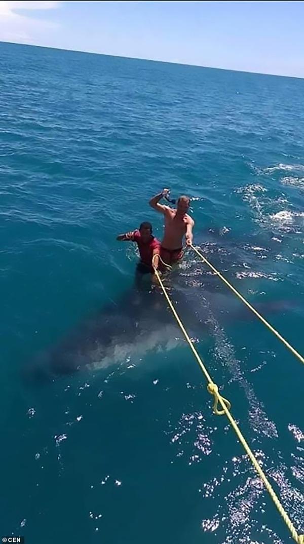 カリブ海のリゾートでジンベイザメに乗ってサーフィンをした旅行業者と旅行客が批判を受ける
