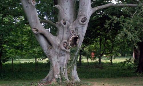 scary-tree_682_1325673a