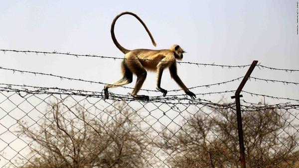 【インド】生後12日の赤ちゃん、サルに襲われ死亡