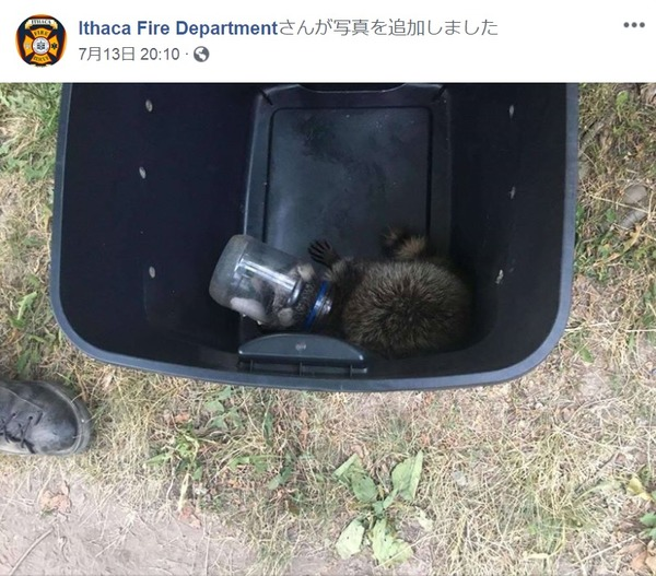 マヨネーズの瓶に頭を突っ込んで抜けなくなったアライグマ、消防署員らに救出される[画像]