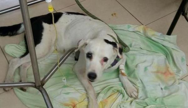 空港に捨てられた犬。1ヶ月主人を探し自分が捨てられたことを理解する→