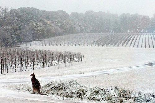 【画像】 オーストラリアで100年ぶりに雪が観測される