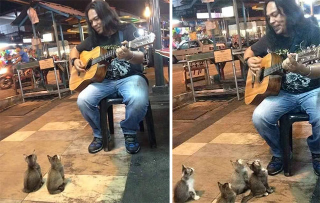 cats-and-street-performer