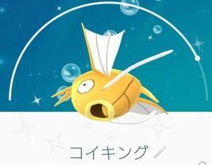【ポケモンGO】初めての金コイゲットに喜ぶトレーナー、捕獲数がスゴい事になってるww