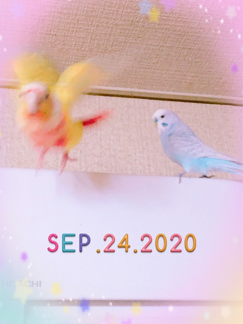 S__500490242