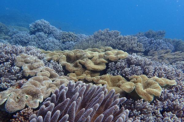 砂辺サンゴ