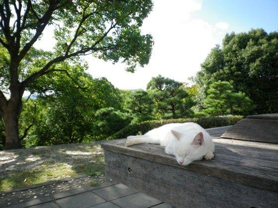 大倉山 猫