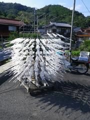 スルメ製造機