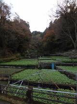 2013_11_30 nisiizu 18