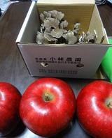 2013_10_27 hotaka 07