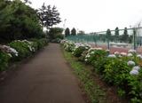 2013_06_25 higasimatuyama 04
