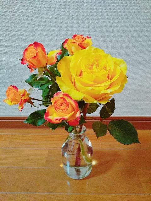 一旦ラストとなる、ケニアの薔薇を迎え入れ。#こういう時こそお花を飾ろう