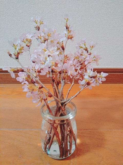 お花見ができない、ならば家で桜を楽しめばいい。さくらの日に、桜を迎え入れ。