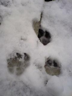 マロンの足跡