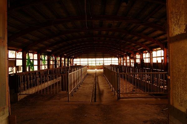 奥の牛舎内部