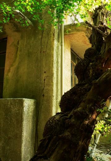 毒っぽい木