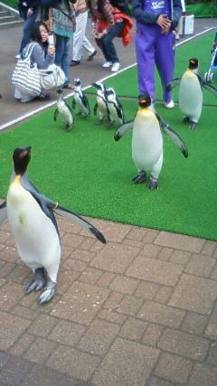 春日ペンギン