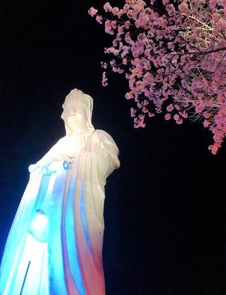 観音山夜桜