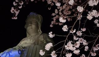 2016桜&白衣観音