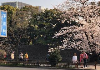 2018東京さくら